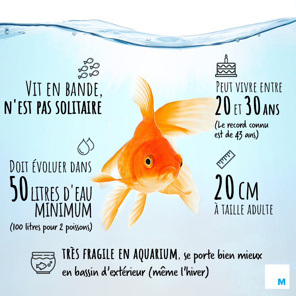 plaidoyer poisson rouge.png