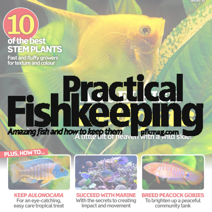 Britain's best-selling fishkeeping magazine. An essential read for both newcomers and experienced fish keepers. Covering all areas of fishkeeping, whether you look after tropical fish, marine fish or cold water fish. Demographic: 65% ABC1 - 97% Male - Av. age 56
