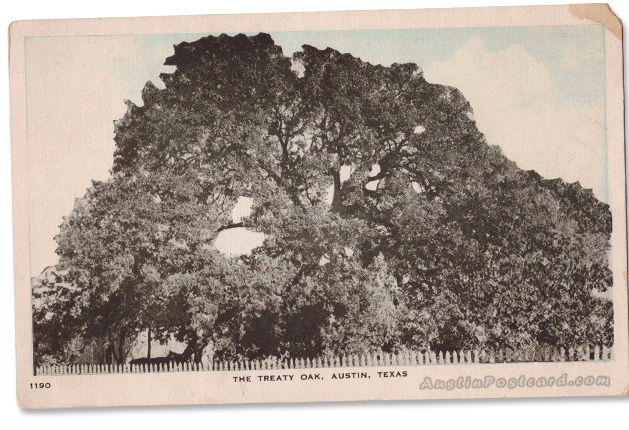 Historic Treaty Oak.