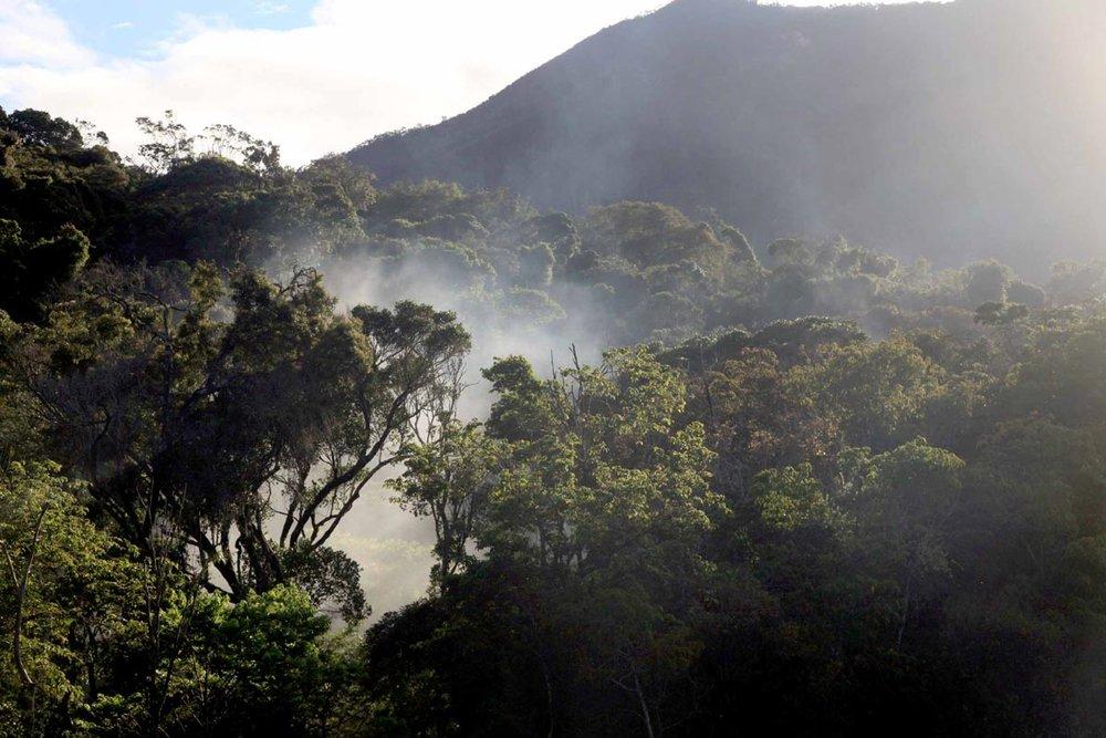 Deforestation-Madagascar-James-Borrell.jpg