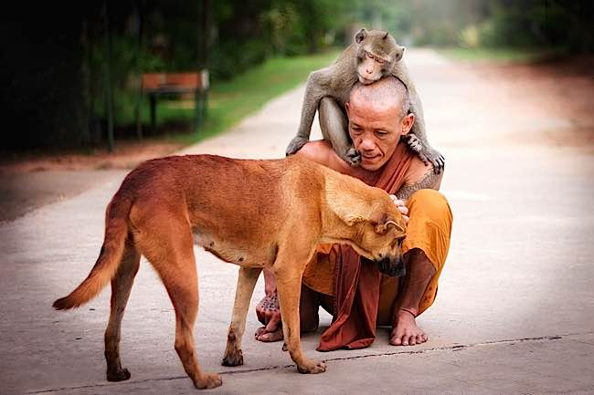 Buddha-Weekly-Monk-with-dog-and-monkey-friend-shows-compassion-kindness-Buddhism.jpg