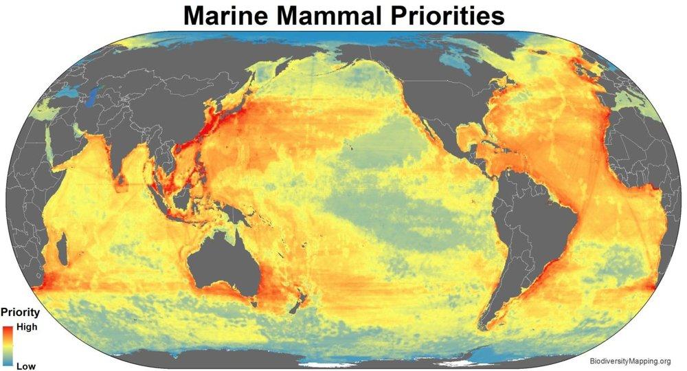 Marine_mammals_priorities-1200x648.jpg