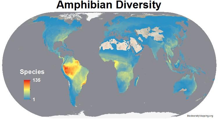 Amphibians_all.jpg