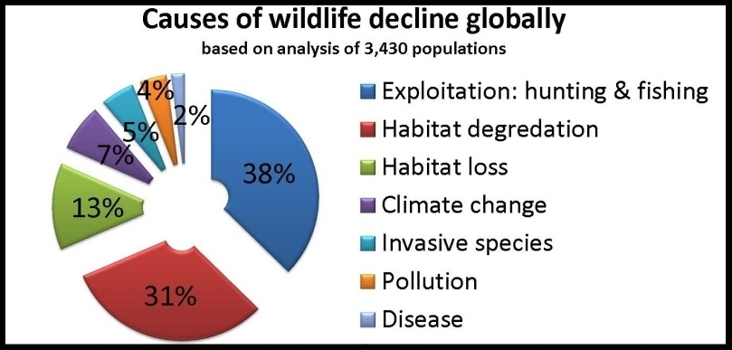 wildlife-decline-1024x490.jpg