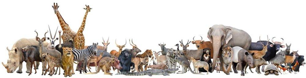 Logo Animals.jpg