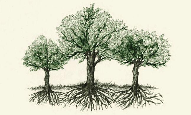 https---www.themonthly.com.au-sites-default-files-Hidden-Life-of-Trees-crop1.jpg