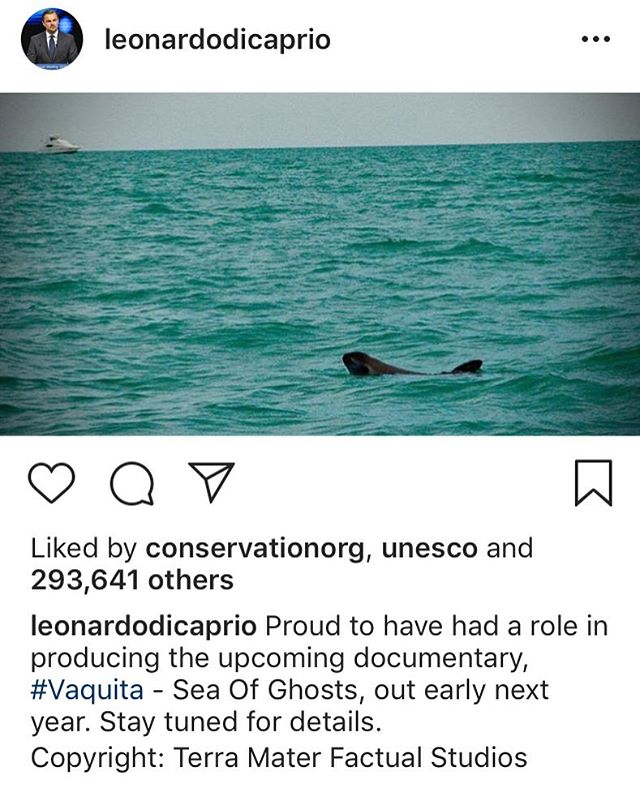 We've just partnered with @wildlensinc and they have an EXTREMELY exciting announcement coming soon... watch this space! ********** #PR #Comms #vaquita #vaquitaseaofghosts #internationalsavethevaquitaday #conservation #conservationpr #agency #wildlifefilmmaking #wildlifefilm
