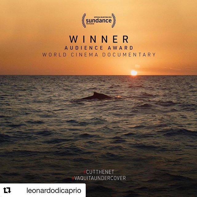Huge congratulations to our clients @wildlensinc, part of the @seaofshadows team, for their #sundance2019 win! #Repost @leonardodicaprio ・・・ Congratulations to the @seaofshadows team on their @sundanceorg win, and thank you to everyone for bringing the plight of the vaquita to the forefront.