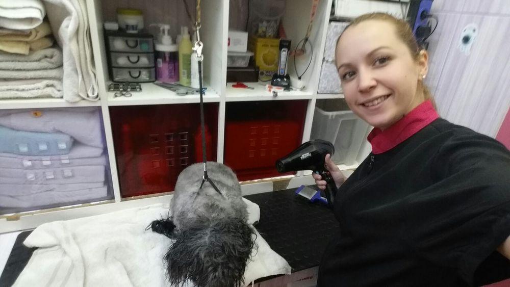"""¡¡¡ Esta semana tenemos felicitaciones por partida doble !!! Para  Cris Trillo Lozano y para Liam.  Cristina terminó nuestro curso de peluquería canina el año pasado y se quedó trabajando con nuestra magnífica profesora Ruth en su peluquería. Sin embargo Cristina siempre ha sido una persona infatigable y encontró trabajo en tres clínicas veterinarias. Actualmente va a pelar a cada una de ellas en días diferentes de la semana. ¡¡¡ Increíble !!!. Por si esto fuera poco, su día libre los domingos, lo suele dedicar junto a un grupo de peluqueras voluntarias a acicalar perros de una protectora (entre otras también está Noelia Rodriguez de la que escribimos un post el otro día). ¡¡¡ Eso sí es amor por los animales los 7 días de la semana !!!.  Pero nos falta la segunda felicitación. Y es que la felicitación por Liam también va para Cristina. Liam es un nombre de origen irlandés, es el que alcanza sus metas y nunca se rinde. Amable, cariñoso y servicial. Es indudable que Liam ha adquirido esas cualidades, a las que hace mención su nombre, de su madre Cristina. Pero Liam todavía no está aquí, sólo tiene 7 meses y Cristina espera ver su cara por primera vez dentro de dos meses.  """"Felicitaciones por esta maravillosa noticia. Ese bebé que se está formando en ti es muy afortunado porque tendrá unos padres increíbles."""" Os deseamos a los dos lo mejor."""