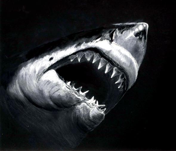 shark kontrast.png