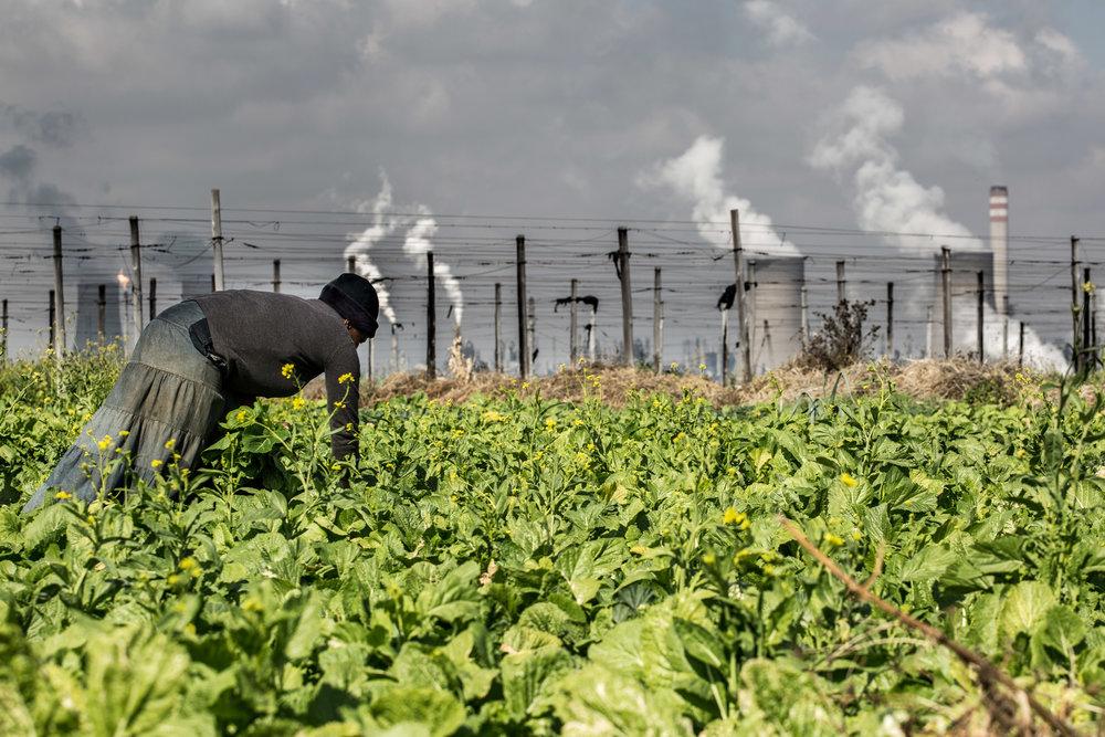 -CR0A8180_SOUTHAFRICA_SECUNDA_FARMERS.jpg