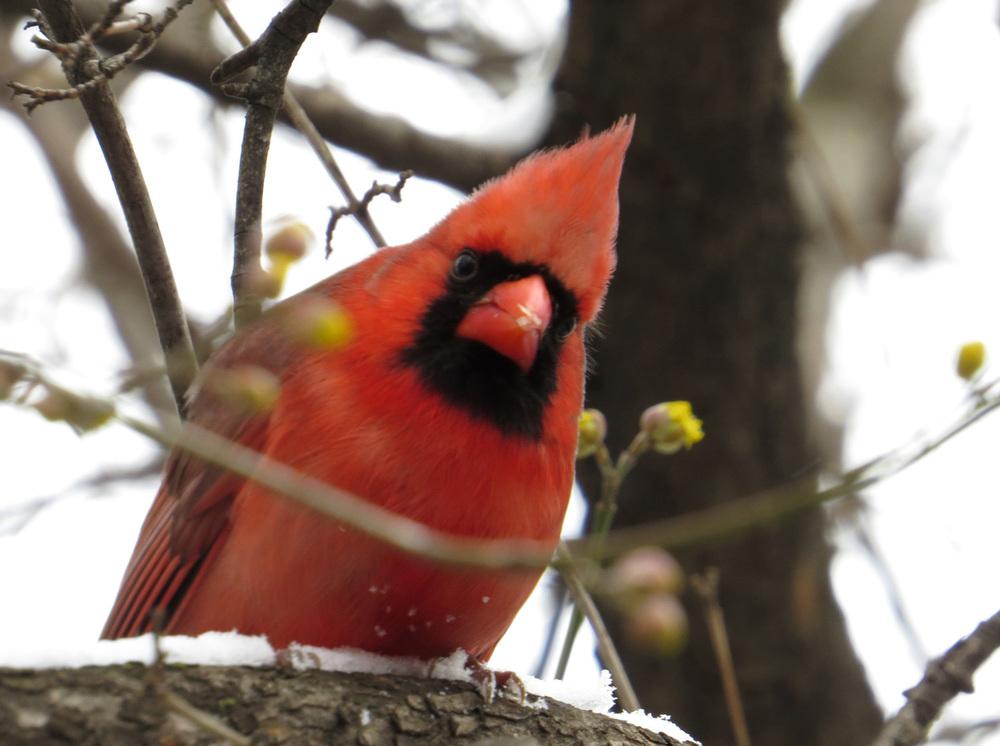 Cardinal 1500 3-4-2016 017.jpg