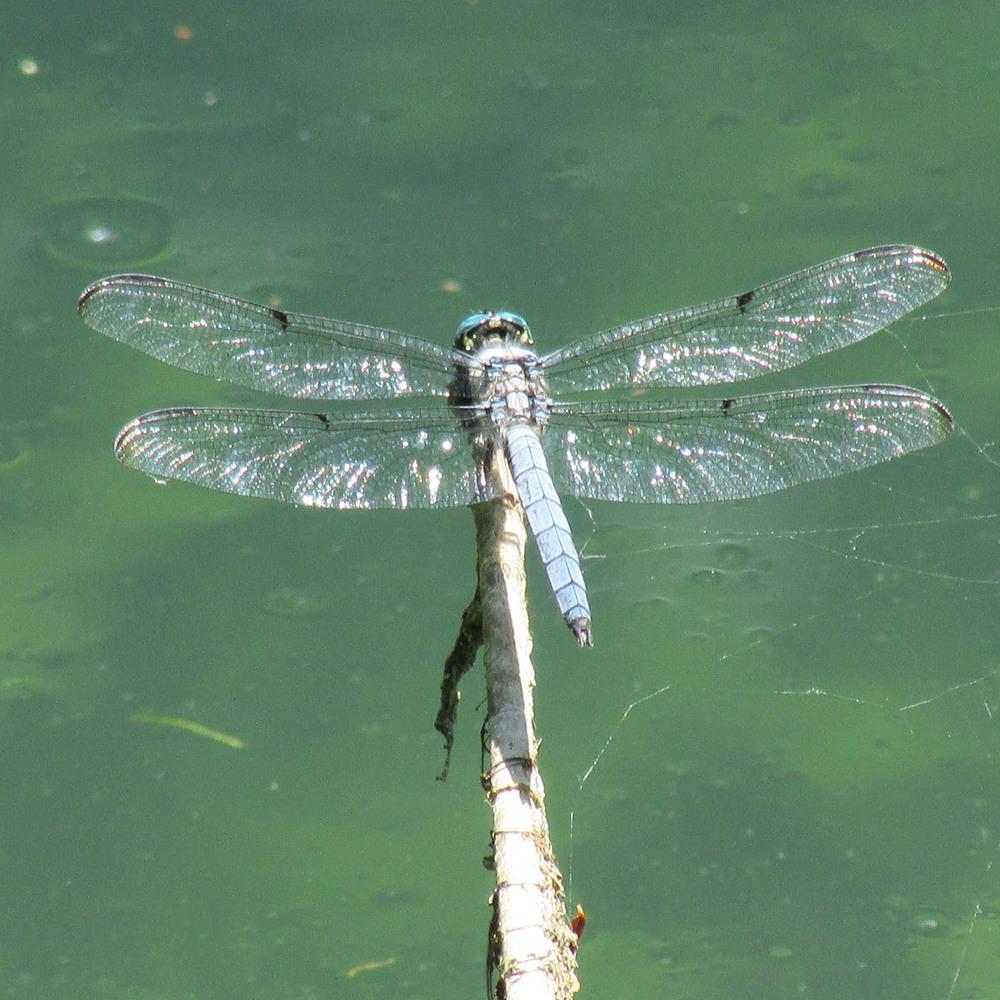 Dragonfly 1500 6-20-2013 116.jpg