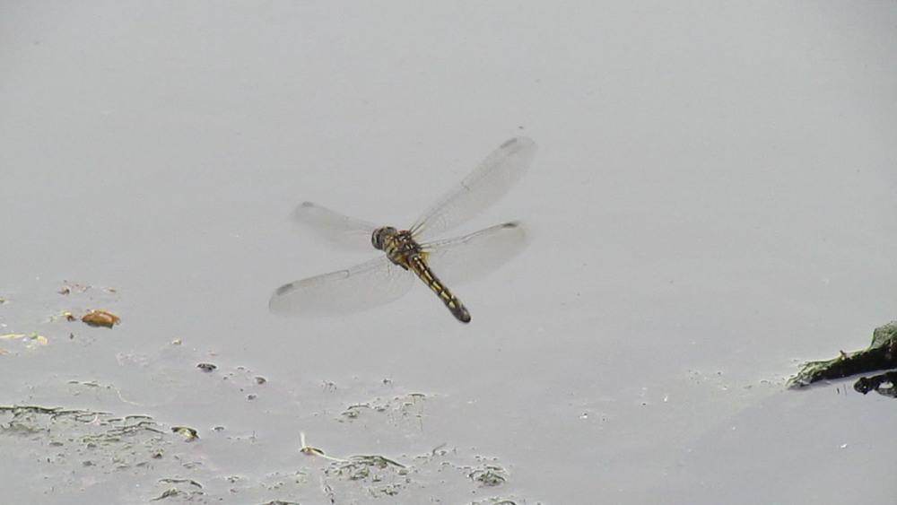 Dragonfly 1500 6-28-2013 328A.jpg