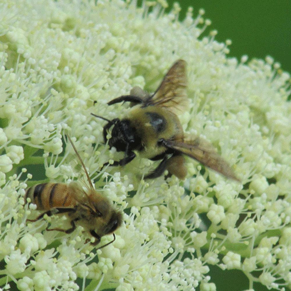 bees 1000.jpg