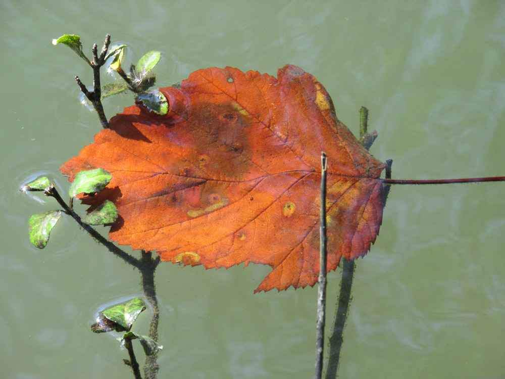 This leaf photograph is one of my favorites, from April 2013.