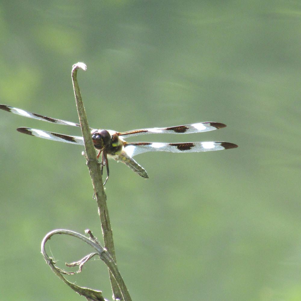Dragonfly CP 1500 7-26-2013 101.jpg