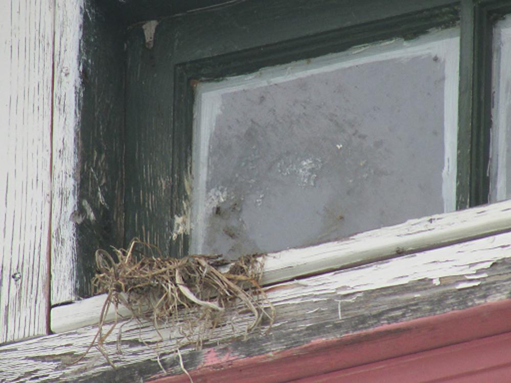 Nest 2 1500.jpg