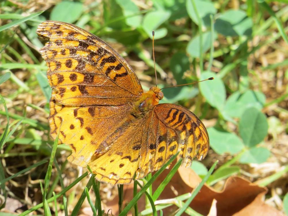 Butterfly 1500 8-5-2015 083.jpg