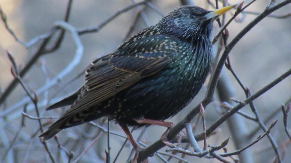 Starling 1500 3-2013 217.jpg