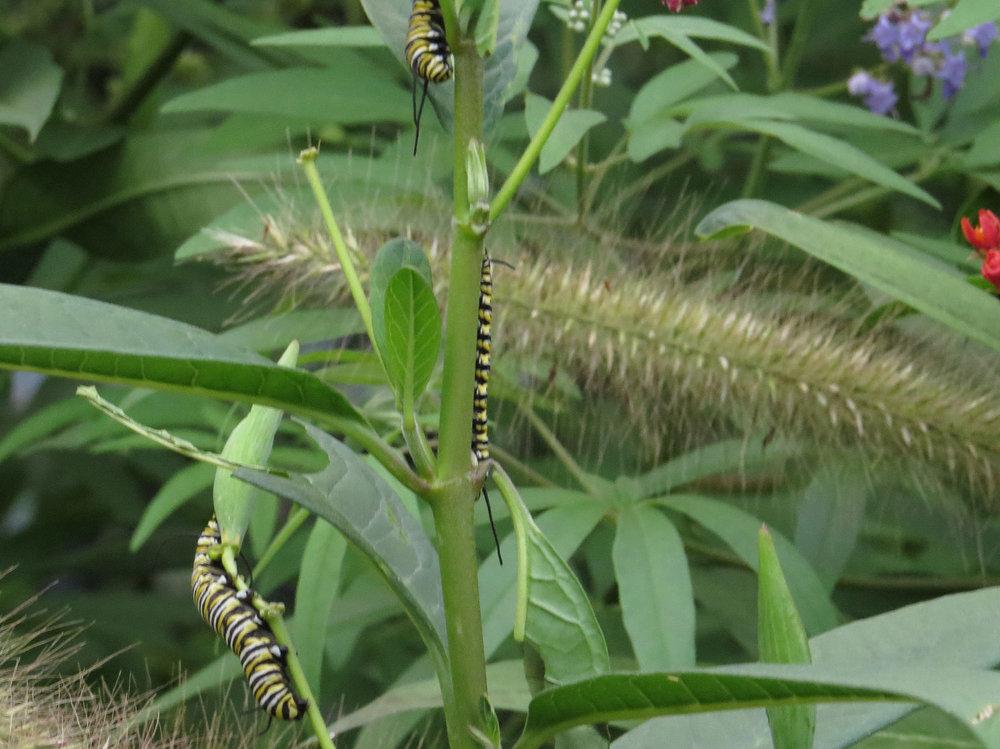 Caterpillar 1500 8-31-2016 174P.jpg