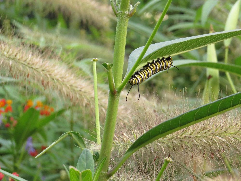 Caterpillar 1500 8-31-2016 121P.jpg