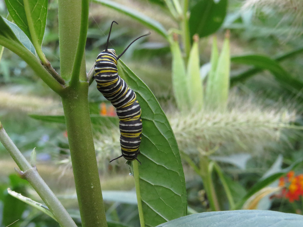 Caterpillar 1500 8-31-2016 152P.jpg