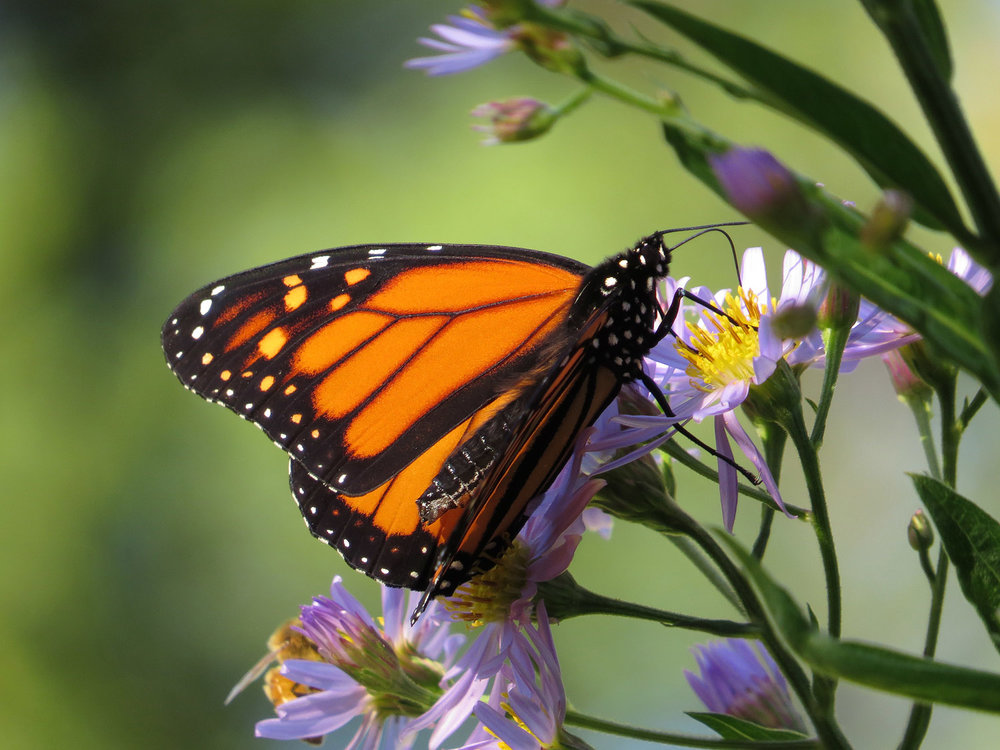 Monarch 1500 10-12-2016 037P.jpg