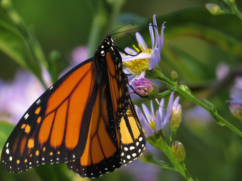 Monarch 1500 10-12-2016 044P.jpg