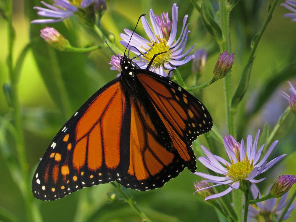 Monarch 1500 10-12-2016 047P.jpg