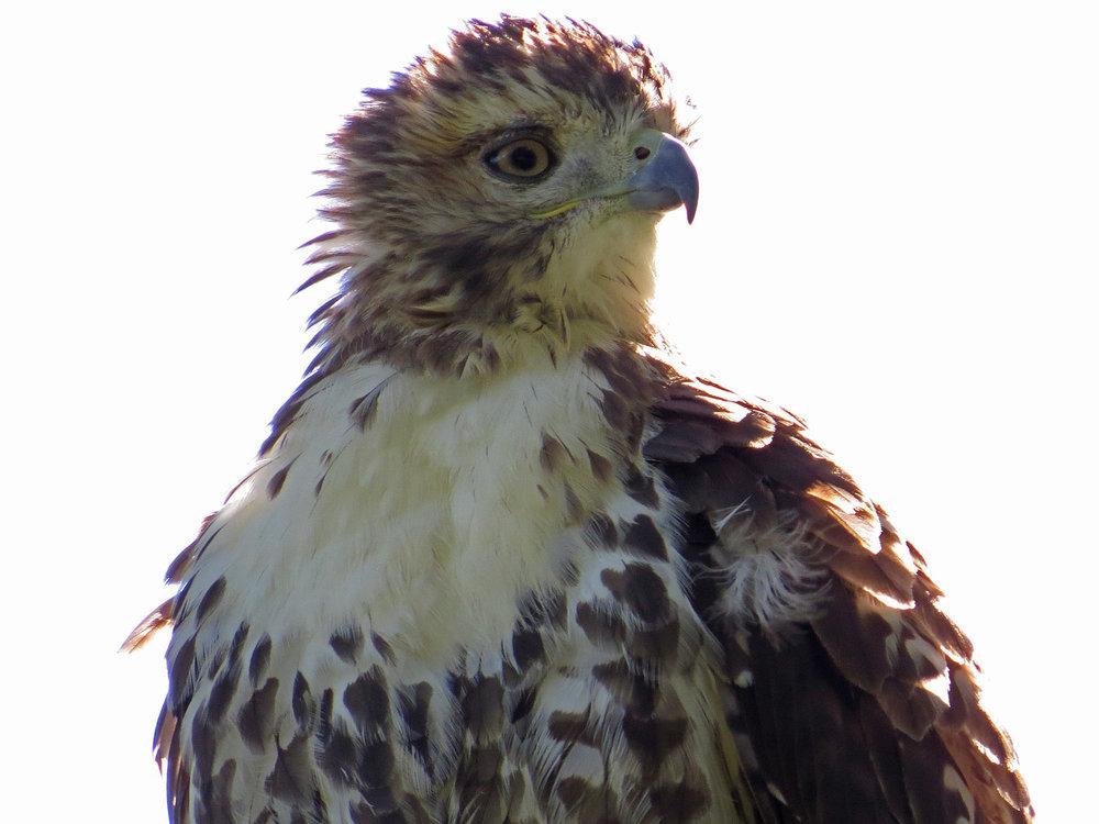 Hawk 1500 10-5-2016 078P.jpg