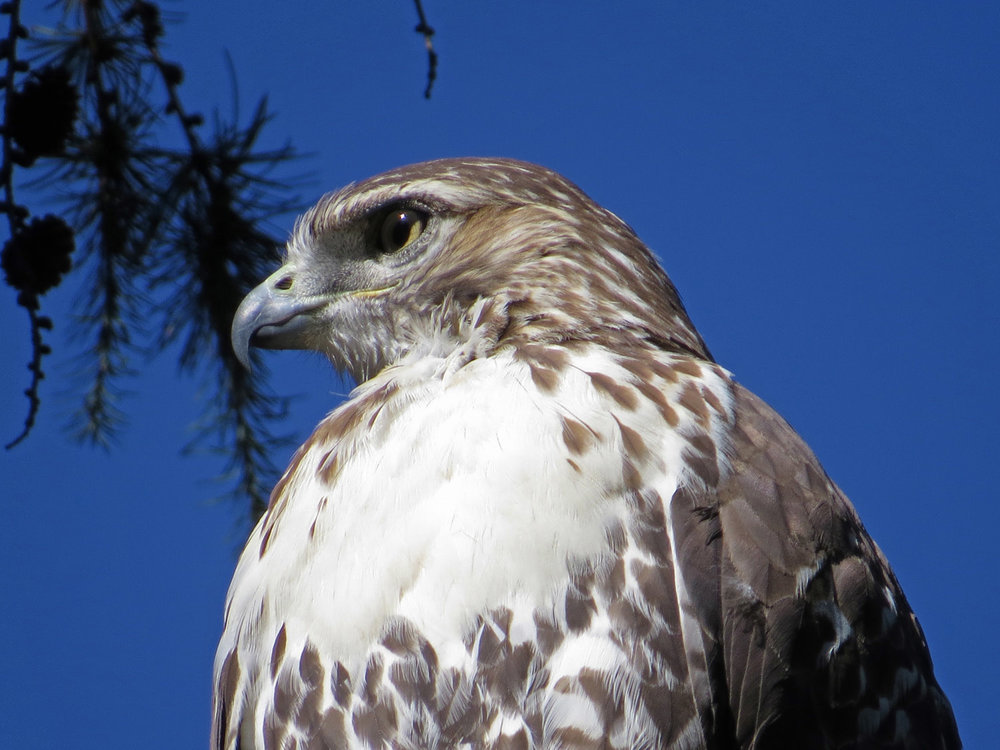 Hawk 1500 10-5-2016 124P.jpg
