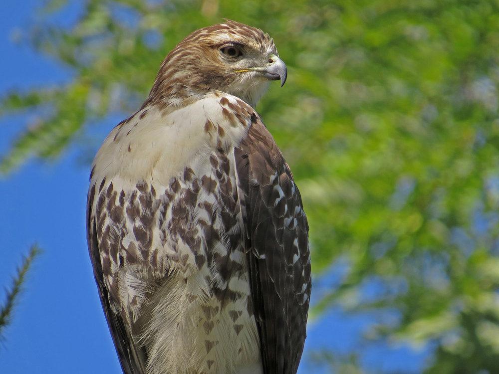 Hawk 1500 10-5-2016 145P.jpg