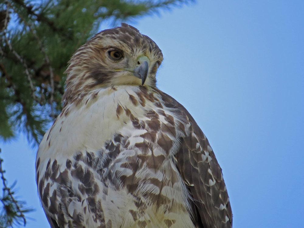 Hawk 1500 10-5-2016 177P.jpg