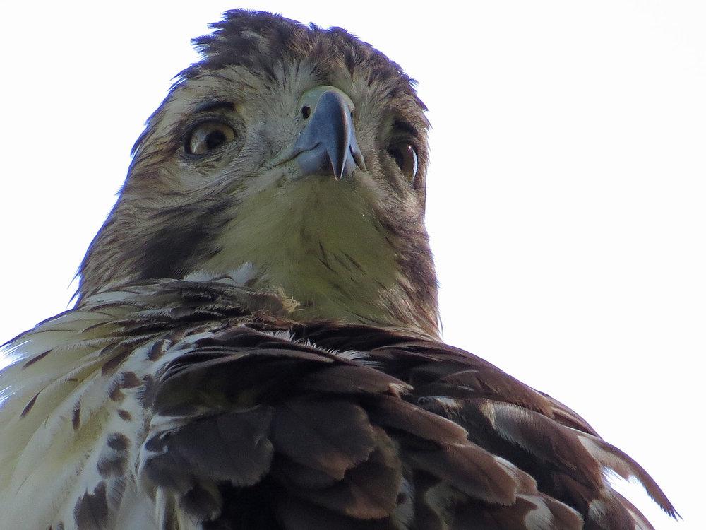 Hawk 1500 10-5-2016 209P.jpg