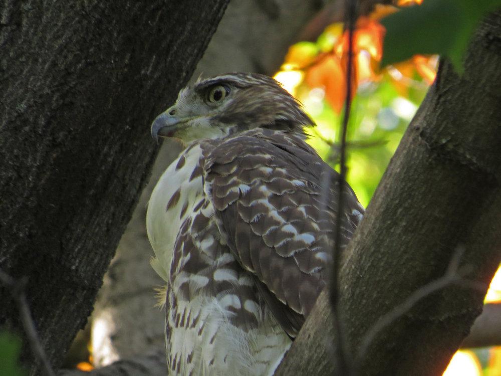 Hawk 1500 10-12-2016 007P.jpg