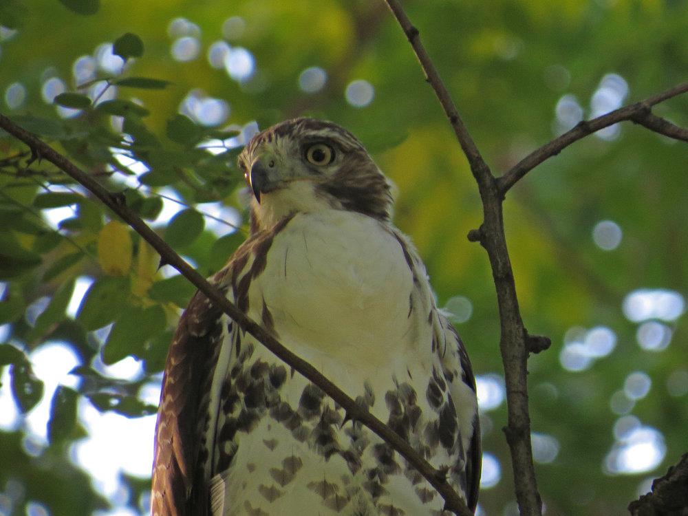 Hawk 1500 10-12-2016 005P.jpg