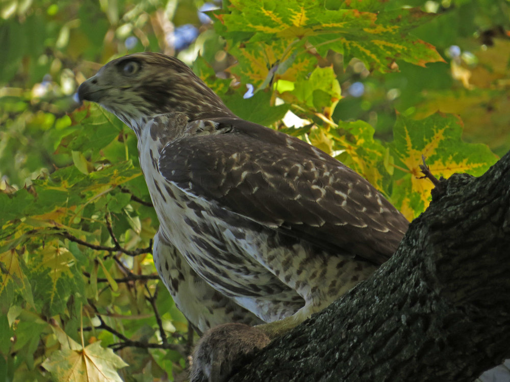 Hawk 1500 10-12-2016 018P.jpg