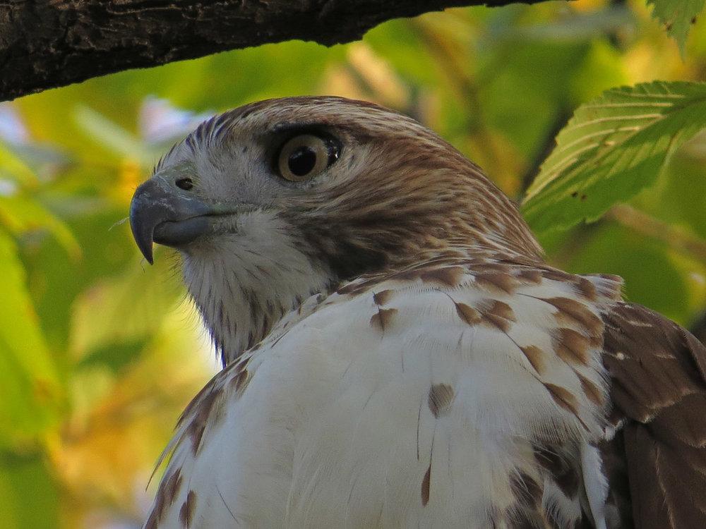 Hawk 1500 10-23-2016 031P.jpg