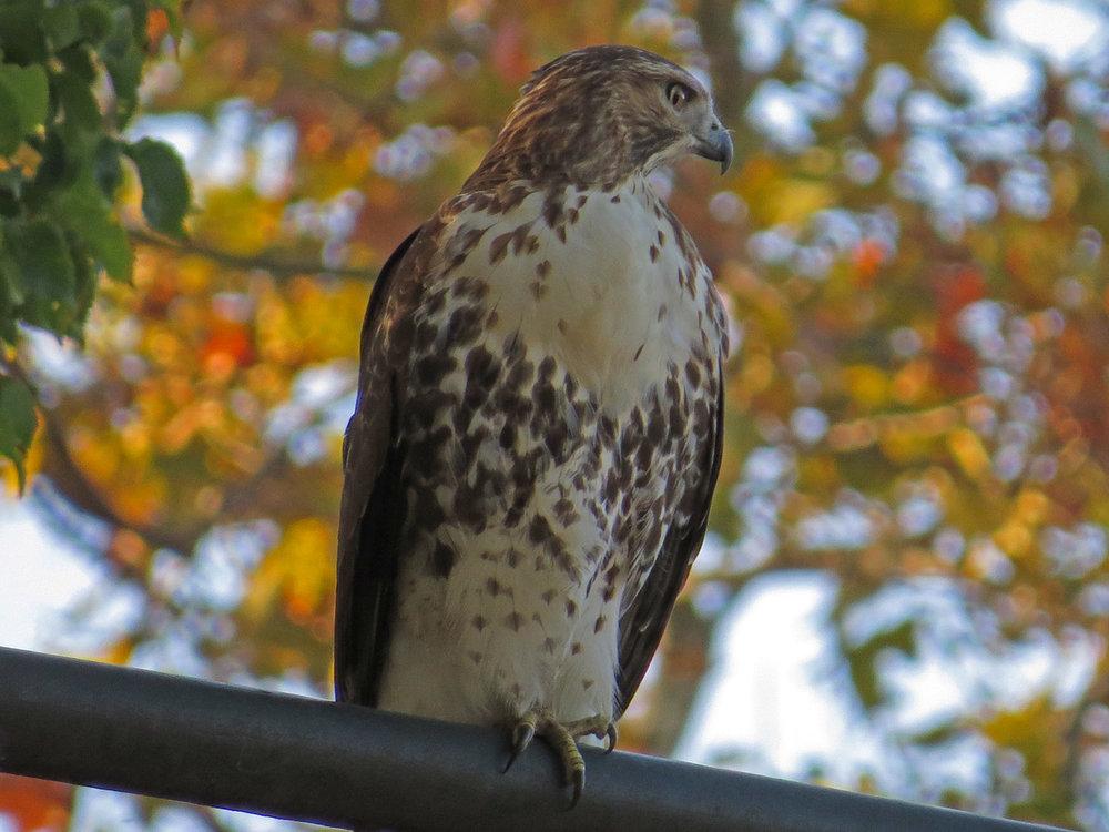 Hawk 1500 10-23-2016 036P.jpg
