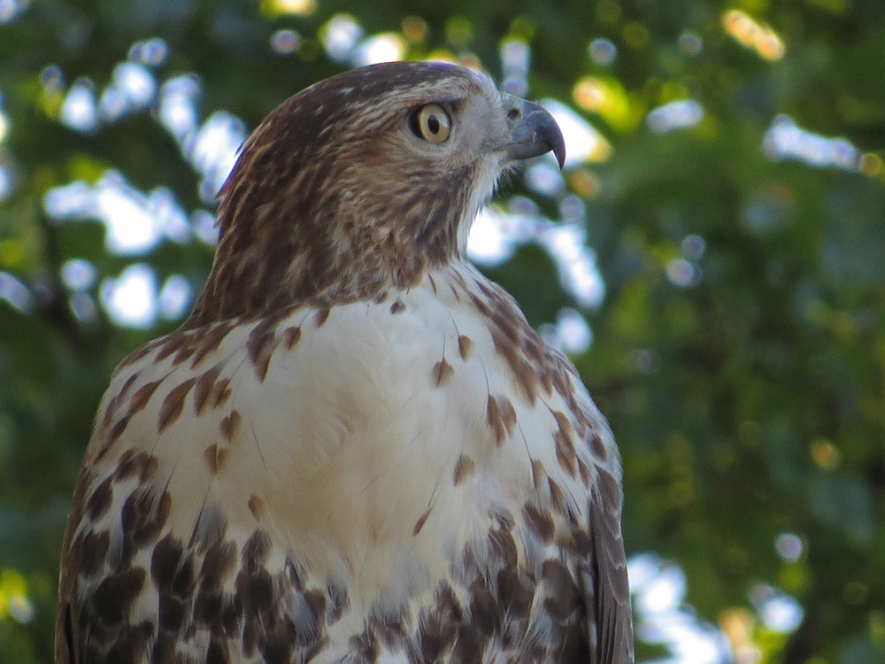 Hawk 1500 10-23-2016 039P.jpg