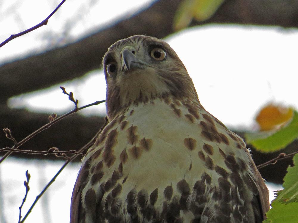 Hawk 1500 10-23-2016 099P.jpg