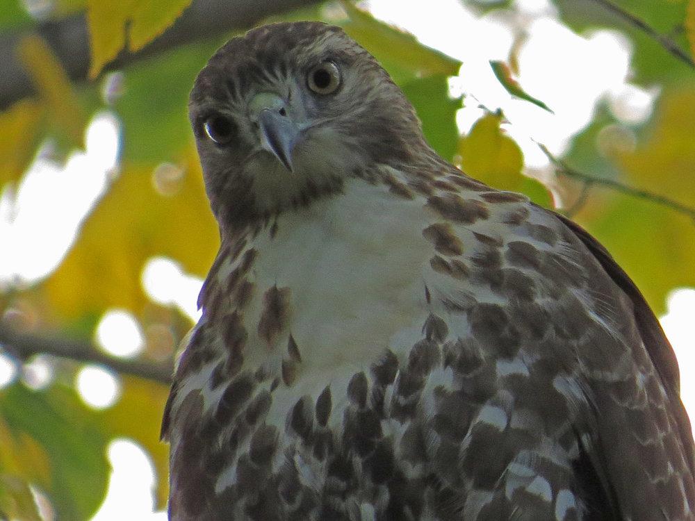 Hawk 1500 10-23-2016 111P.jpg