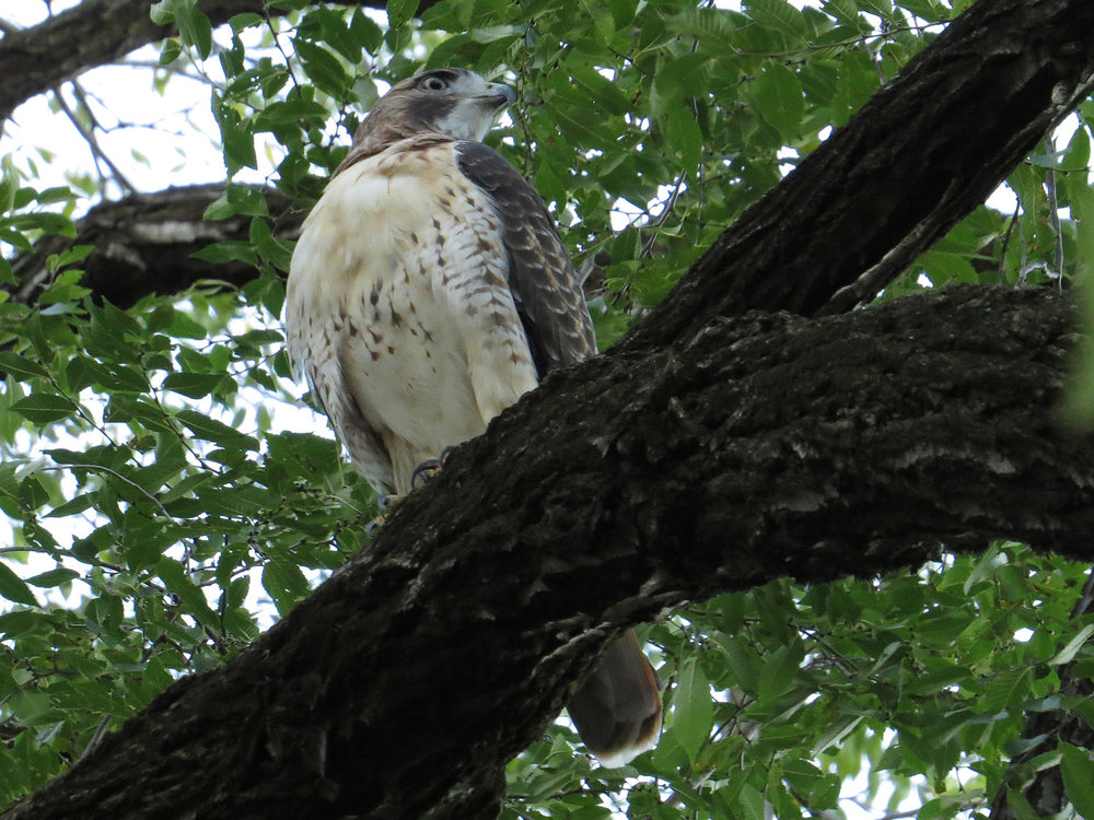 Hawk 1500 10-28-2016 028P.jpg