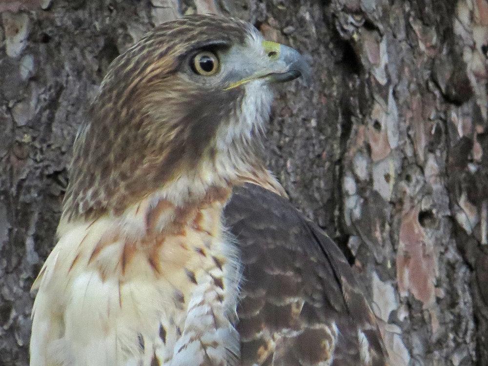 Hawk 1500 10-28-2016 065P.jpg