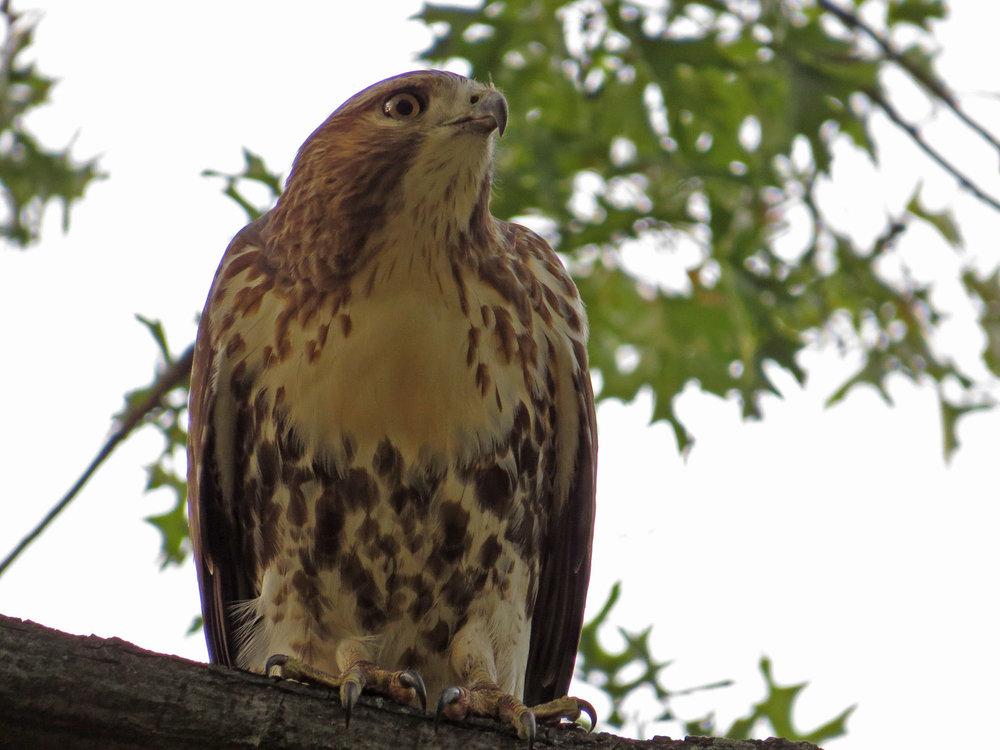 Hawk 1500 10-26-2016 070P.jpg