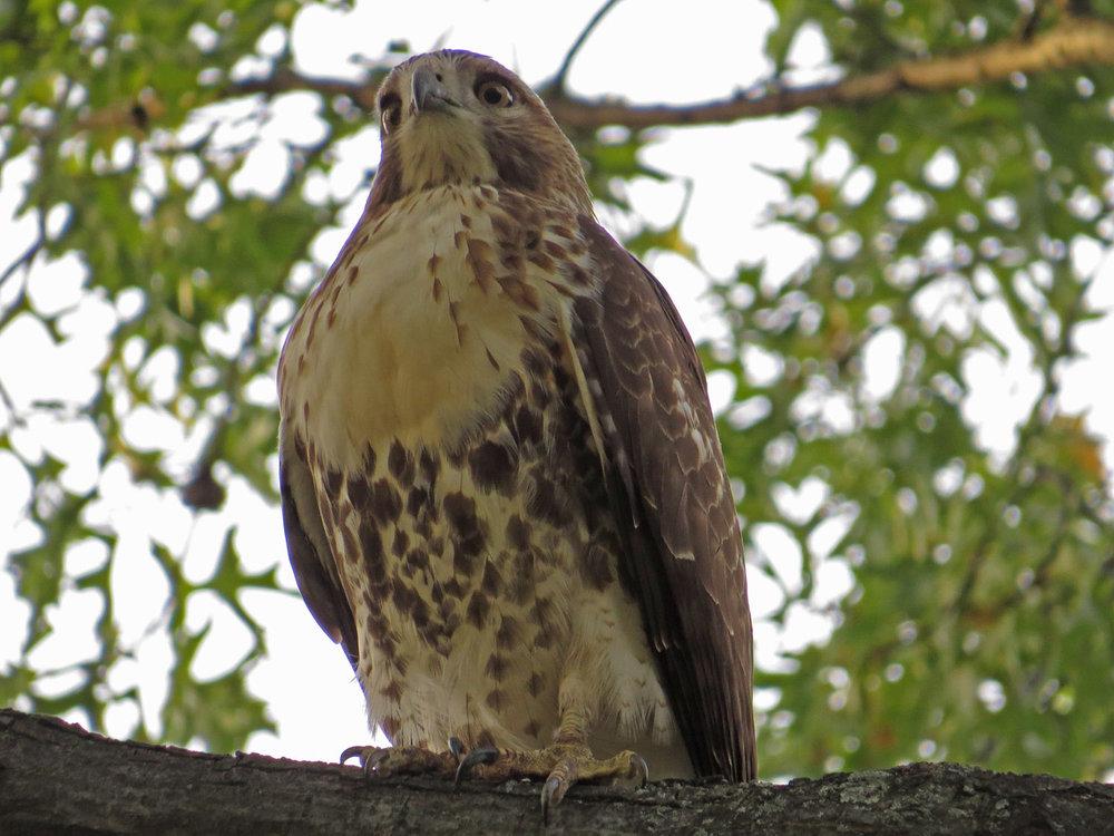 Hawk 1500 10-26-2016 078P.jpg