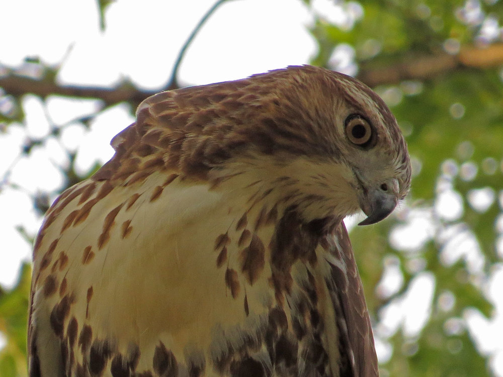 Hawk 1500 10-26-2016 084P.jpg