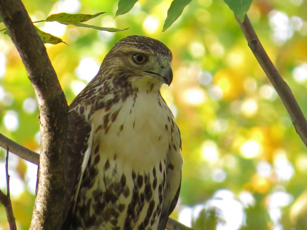 Hawk 1500 11-2-2016 070P.jpg