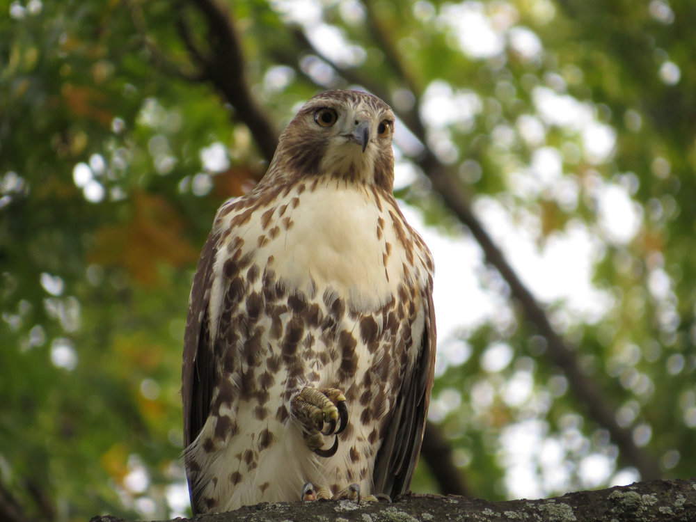 Hawk 1500 10-26-2016 056P.jpg